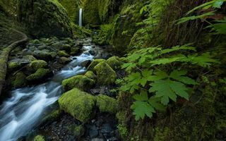 Обои Mossy Grotto Falls, ручей, Columbia River Gorge, листья, Oregon, водопад, камни, Ruckel Creek, мох