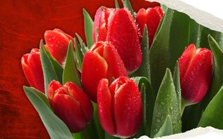 Обои flowers, colorful tulips, Nature, spring