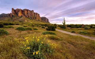Обои landscape, Flowers bloom, Superstition Wilderness, Arizona desert