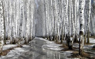 Картинка trees, winter, nature, snow