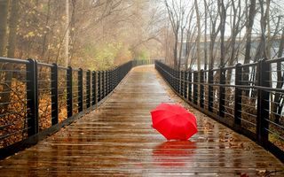 Обои fall, umbrella, view, park, leaves, walk, rain, forest, trees, nature, water, bridge, autumn, river
