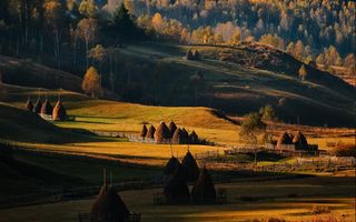 Обои all, Grass, Forest, Sunrise, Field