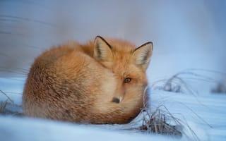 Красивые картинки животные зимой на рабочий стол
