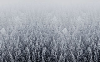 Картинка forest, default, snow, ios, mac