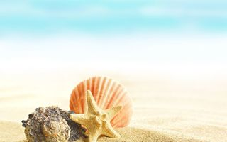 Обои sand, shells, Seashells, beach, summer
