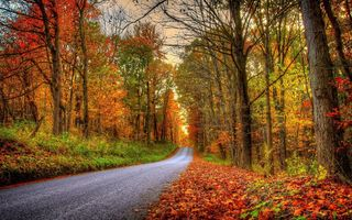 Обои leaves, walk, autumn, fall, colorful, colors, path, Road, forest, park, trees