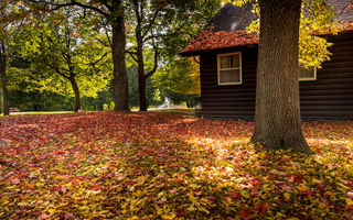 Обои park, trees, forest, colors, bench, autumn, house, walk, fall, leaves, colorful