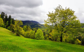 Картинка lawn, mountains, полянка, trees