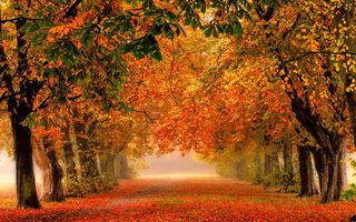 Обои fall, walk, Road, park, trees, autumn, path, forest, colorful, leaves, colors