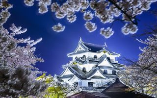 Обои Japan, Hikone castle, Япония, замок хиконэ, hikone, Весна