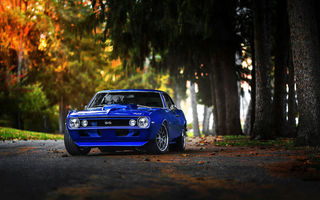 Обои forest, Muscle, 1969, blue, camaro, car, fall, chevrolet, Color