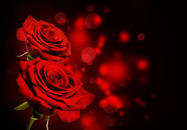 Обои розы, roses, red, black, flowers