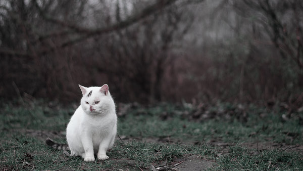 Обои sit, white, darkness, autumn, cat, grass, cold, anger, green