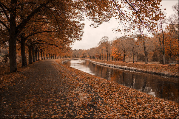 Обои tree, leaves, river, autumn