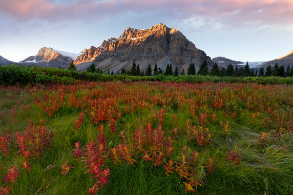 Обои canada, fields of red - crowfoot glacier, banff national park, bow lake, alberta, icefields parkway