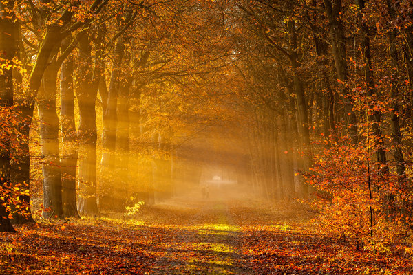 Обои netherlands, drenthe, golden rays of autumn, drowen