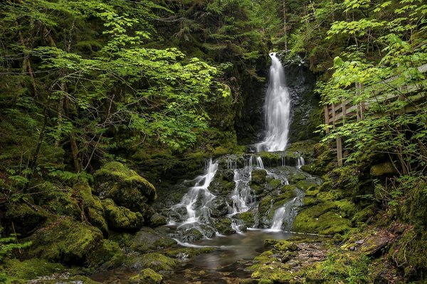 Обои Fundy National Park, водопад, лес, Canada