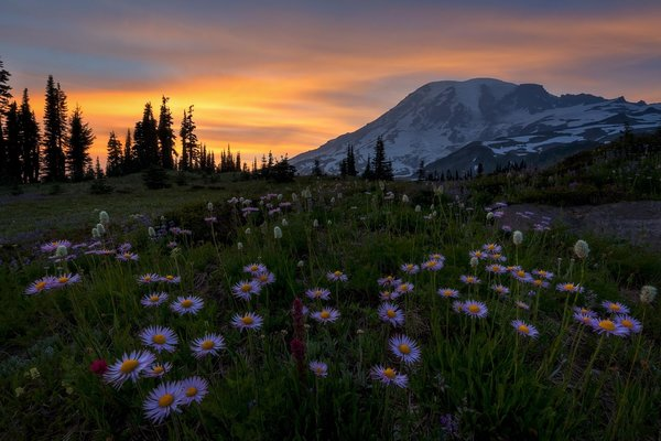 Обои Mount Rainier National Park, Washington, закат, Альпийский луг