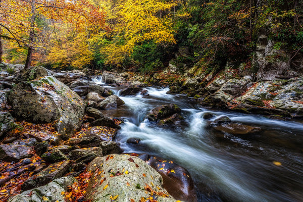 Обои Smoky Mountains National Park, осень, Грейт Смоки Маунтинс Парк, штат Теннесси
