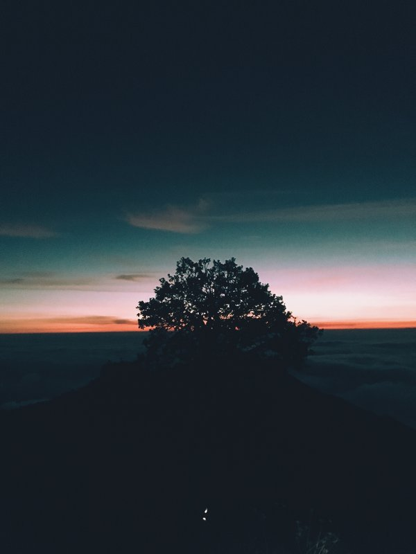 Обои дерево, tree, горизонт, sunset, horizon, холм, hill, закат