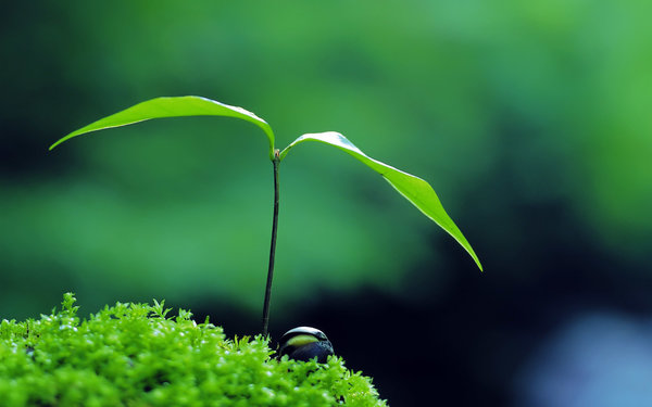 Обои green, zen, nature, plant