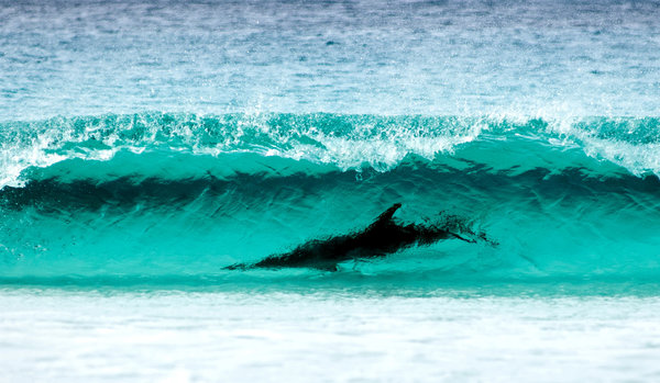 Обои sea, wave turquoise color, Le Grand NP, shore, Cape, breathtaking sight, nature, dolphin, Surfing, water