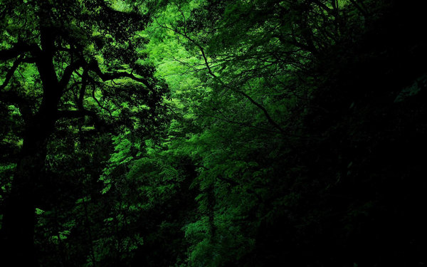Обои dark, green, jungle