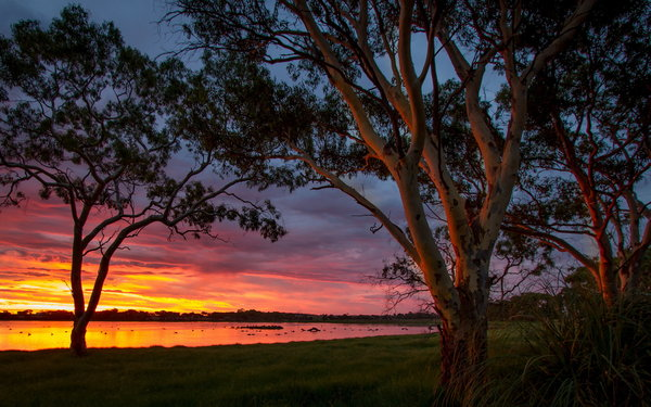 Обои Big Swamp, Sunset, Australia