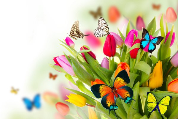 Обои цветы, butterflies, весна, бабочки, fresh, tulips, beautiful, colorful, spring, тюльпаны, flowers