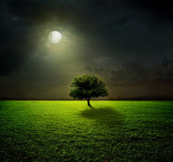 Обои green, night, grass, moon, field, sky, clouds, moonlight, tree