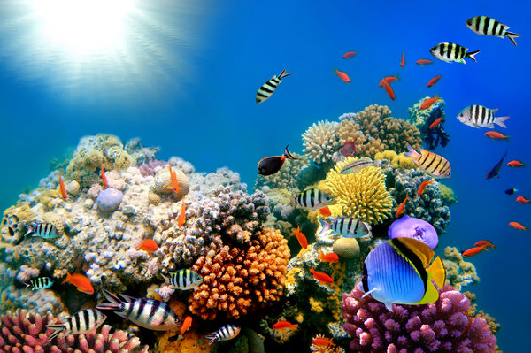 Обои подводный мир, tropical, коралловый риф, fishes, coral, reef, underwater, ocean
