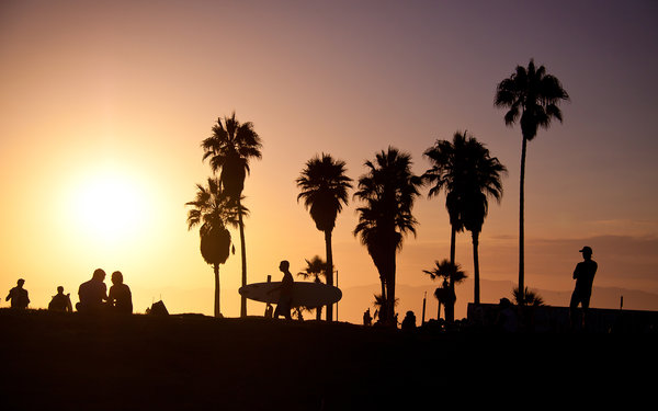 Обои los angeles, usa, california, palm, summer, sunset, surf, vence beach