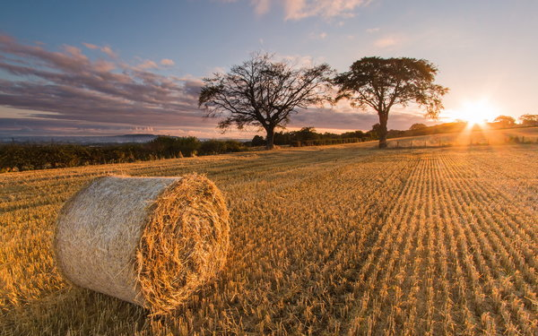 Обои Scotland, Sunrise, Straw, Balerno Harvest