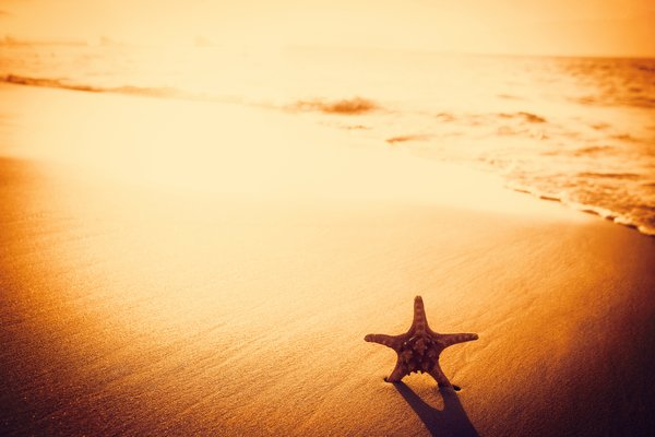 Обои sunset, sand, starfish, пляж, песок, beach