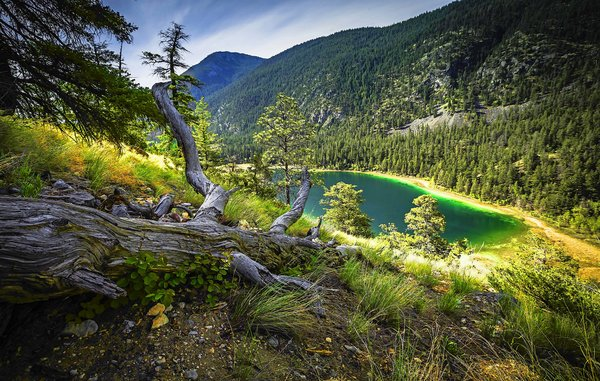 Обои forest, mountain, dry grass, turquoise lake, trees
