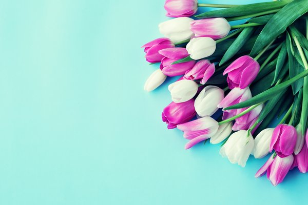 Обои colorful, tulips, flowers, bouquet, тюльпаны