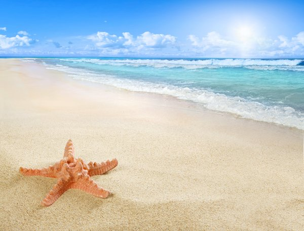 Обои starfish, beach, sand, sea, sun