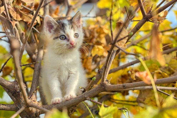 Обои autumn, cat, buds, puppy, tree, foliage, branches