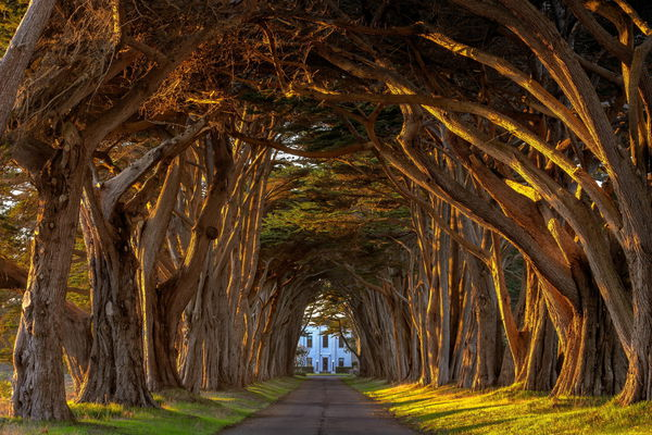 Обои california, tree, trees, cypress, reyes, marconi, station, поместье, point, sunset, аллея, tunnel, light, леревья, лето