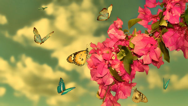 Обои Flowers, Red, Butterfly