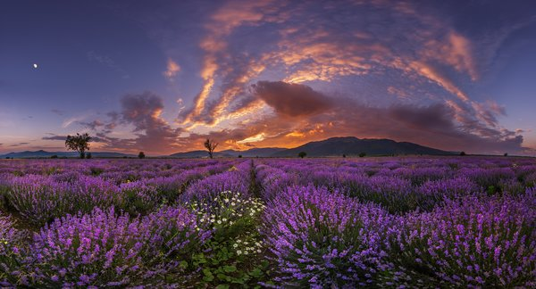 Обои sunset, mountains, flowers
