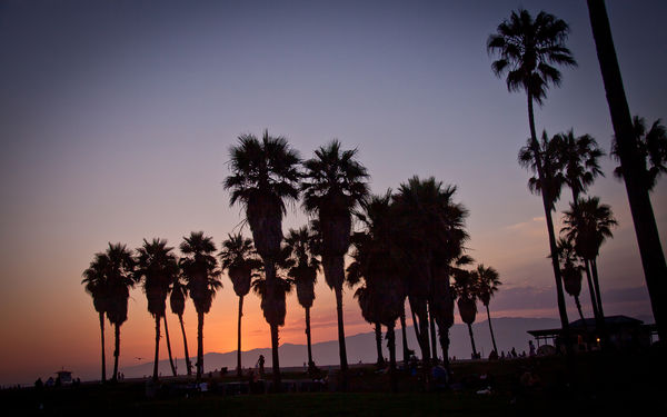 Обои sunset, vennice beach, usa, california, los angeles, summer, palm, la