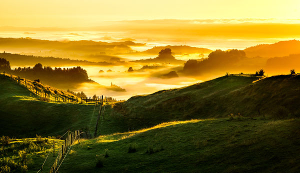 Обои New Zealand, Golden Sunrise, Foggy