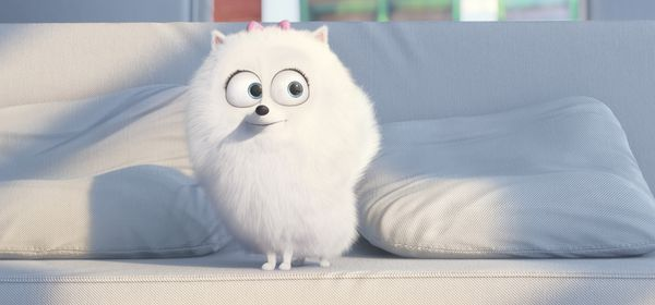Обои The Secret Life of Pets, cinema, pad, movie, Universal Pictures, Illumination Entertainment, animal, leash, pet, adventure, Jenny Slate, puppy, Gigi, hair top, film, family, white fur, drawing, dog, official, white, big eyes, couch, comedy, cartoon, living room, graphic animation
