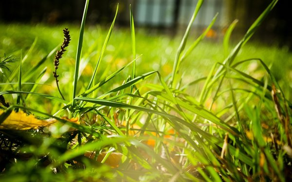 Обои трава, grass, greens, close-up, зелень, макро