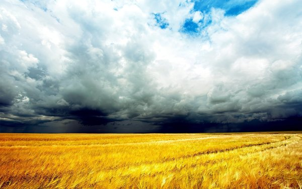 Обои природа, field, photo, clouds, облака, sky, поле, небо, пшеница, wheat, nature