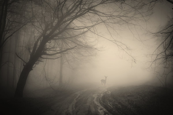 Обои deer, nature, forest, misty, лес, trees, деревья, landscape, жуткий, creepy
