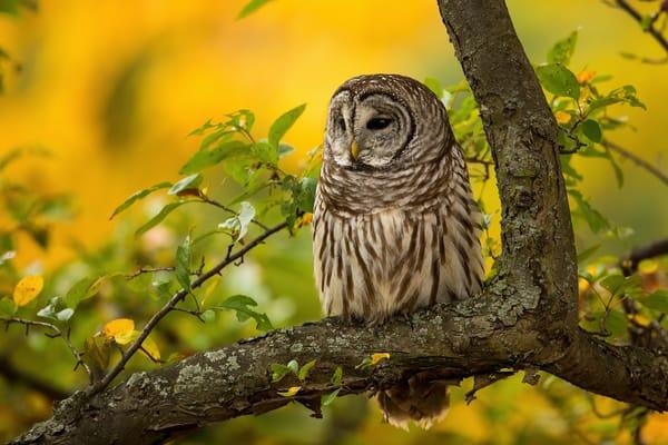 Сова на дереве без смс