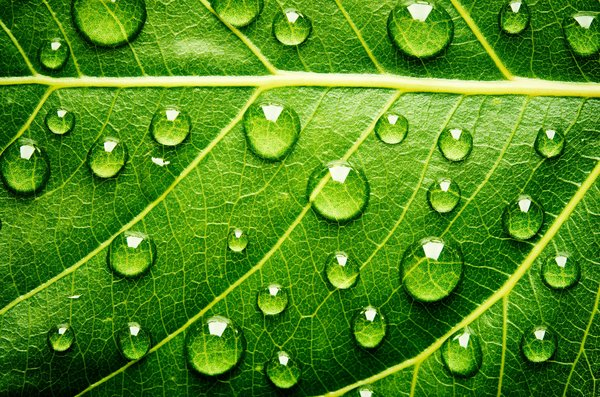 Обои green, leaf, water, drops